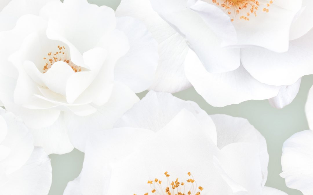 Bloem (Flower)